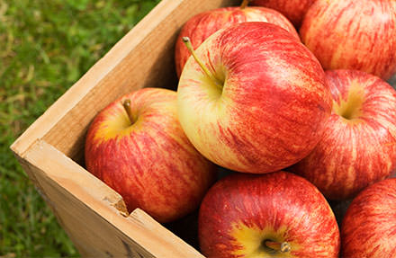 Brookfield Gala Apples